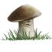 Аватар пользователя Grib_ok