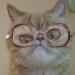 Аватар пользователя TOB_CYXOB