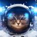 Аватар пользователя Звездокот