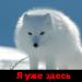 Аватар пользователя nkgb