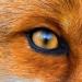 Аватар пользователя RedFox