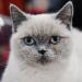 Аватар пользователя Драный кот