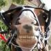 Аватар пользователя Listok