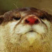 Аватар пользователя Carcass