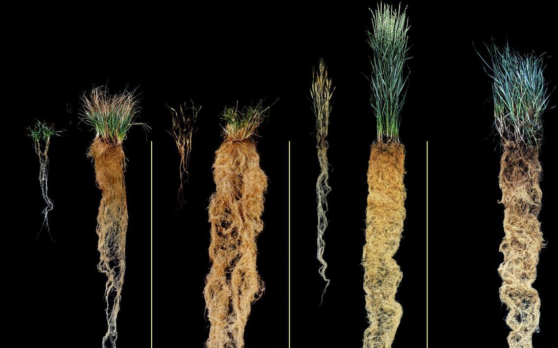 Мировое сельское хозяйство ждет революция