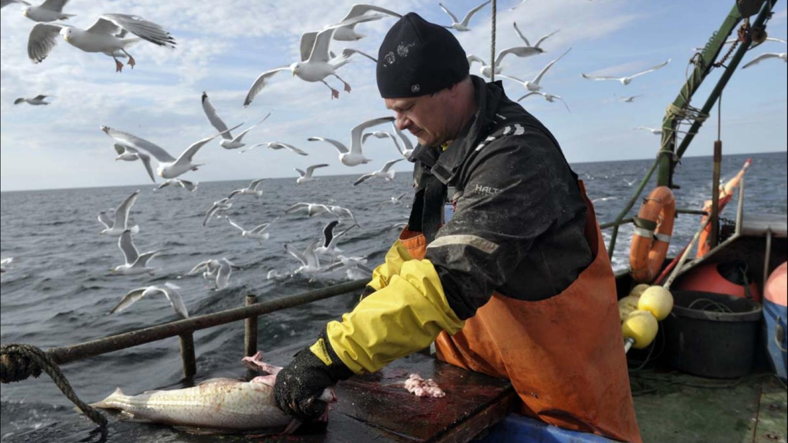 Мурманск. Проблемы прибрежного рыболовства. (kolos)