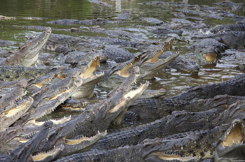 Экономическая оценка Трампом проекта создания на границе с Мексикой рва с аллигаторами и змеями (Bledso)